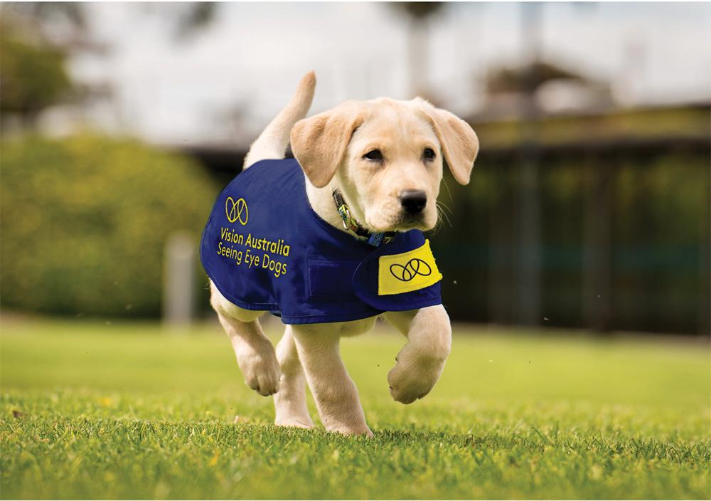 vision_australia_puppy